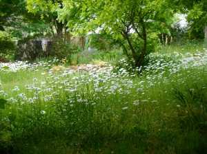 wildflower-02